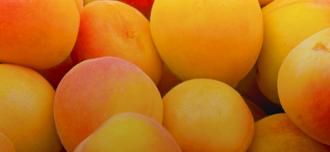Saison Apricots