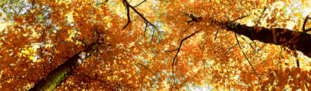 Saison Autumn