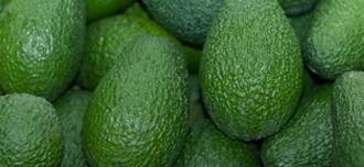 Saison Avocados
