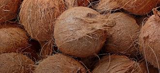 Saison Coconut