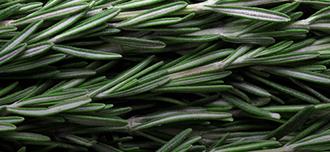 Saison Rosemary